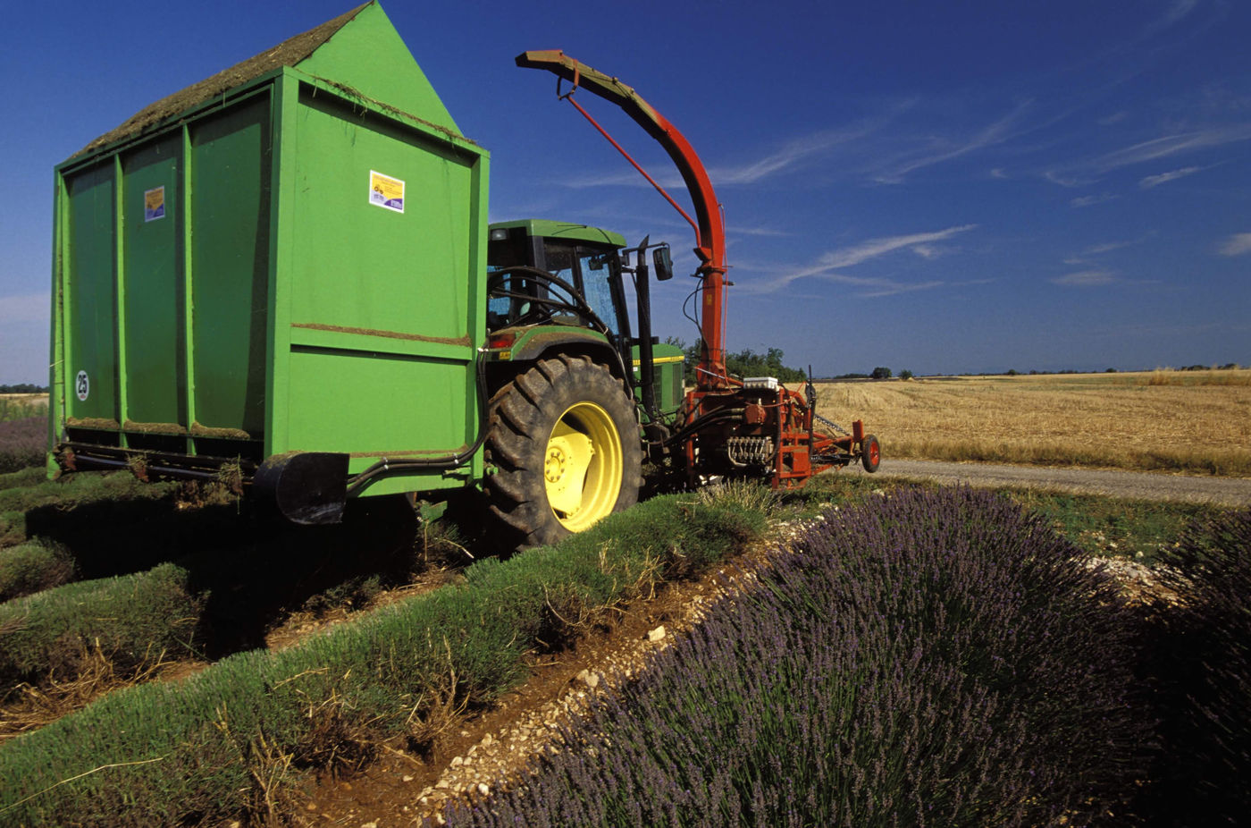 Lavender Flower Harvesting by Machine