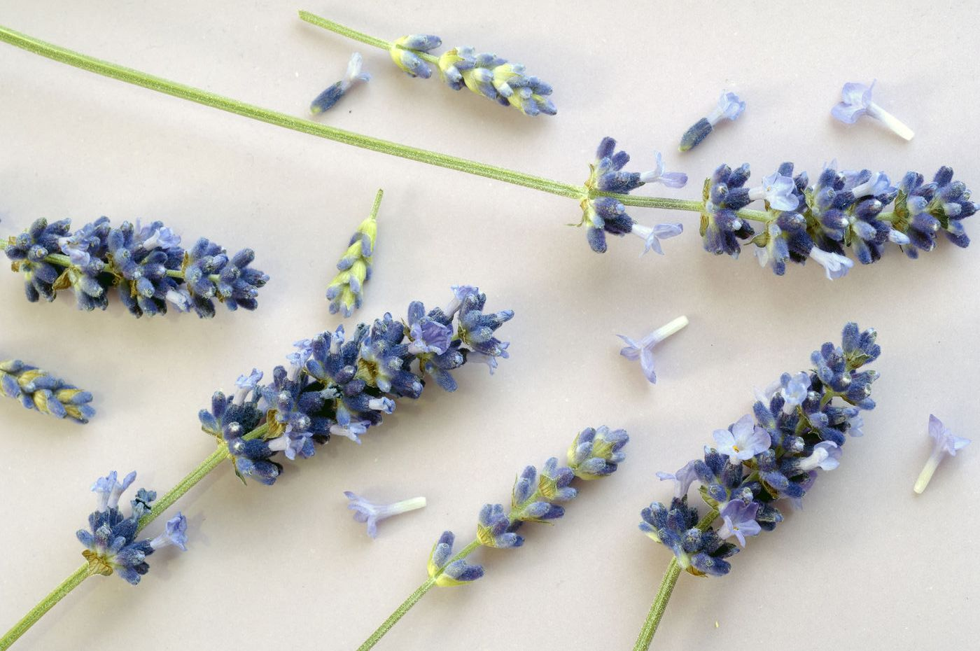 Lavender Flower for tossing at weddings