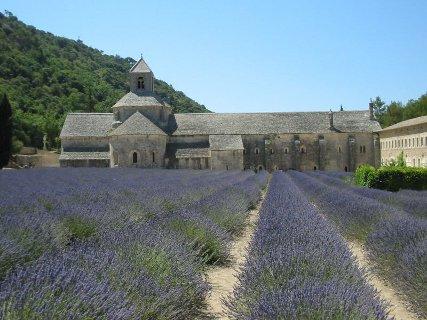 Lavandin, Lavender Hybrida