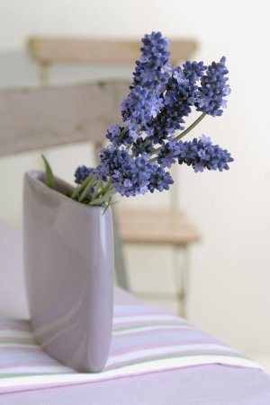 Fresh Lavender flower bouquet in vase
