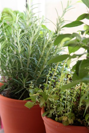Fresh Herbs For Herbes De Provence