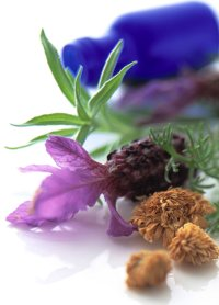 Make Lavender Oil Perfume Recipe