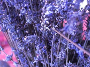 Dried Lavender Flower
