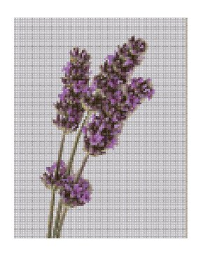 Buy Lavender Cross Stitch