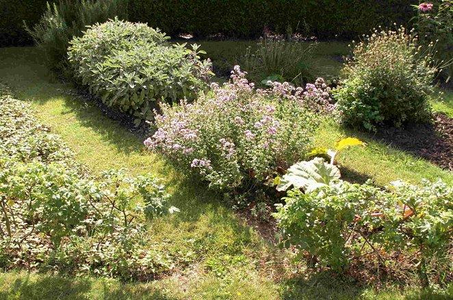 Lavender Herb Garden