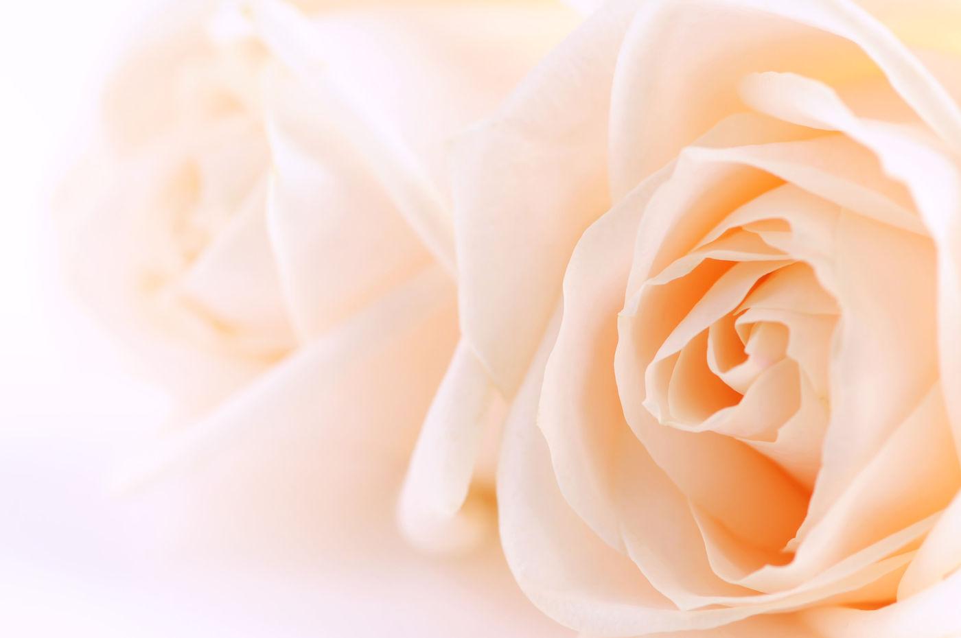 Aromatherapy using Lavender Oil