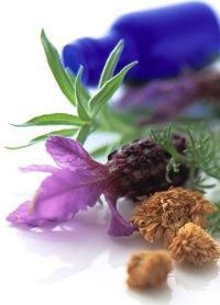 Make Lavender Oil Perfume Recipe